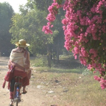 Hooray for bicycles in Bagan!