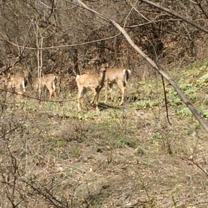 Deer watched me as I walked from the station to CoSM.