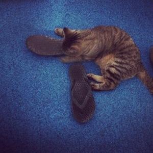 Carlton Arms Cat