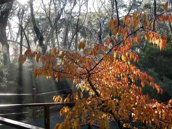 Dhamma Bhumi autumn trees